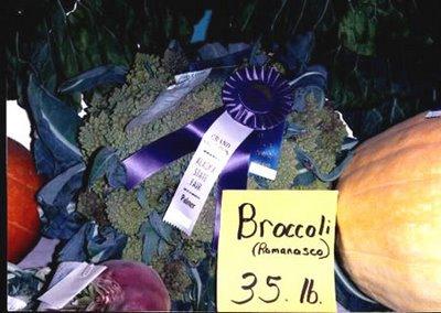 brokoli_jaller.wordpress.com_