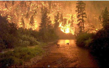 kebakaran hutan di montana