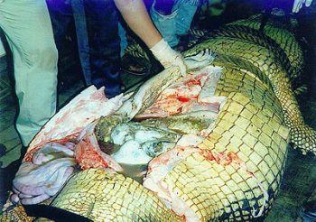 mayat ditemukan di perut buaya