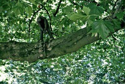 manusia pohon